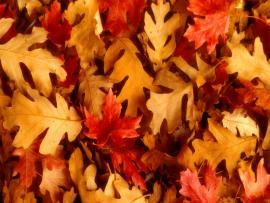 Presentation of Autumn Leaves Backgrounds