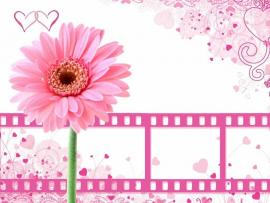 Pretty Pink Flower With Film Clips Backgrounds