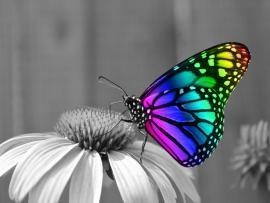 Rainbow Butterfly Desktop HD Photo Backgrounds