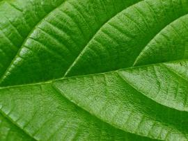 Real Green Leaf Photo Backgrounds