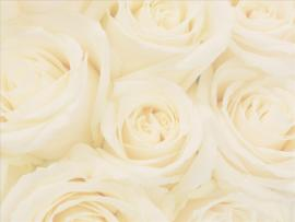 Related Pictures Wedding Roses Hd Picture Backgrounds