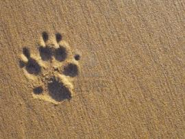Related Pictures With Dog Paw Print and Bone Vector Photo Backgrounds