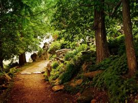Romantic Woods image Backgrounds