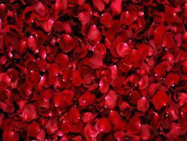 Rosepetal For Hd image Backgrounds