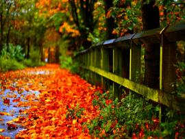 Sad Poetry Autumn Leaves Template Backgrounds