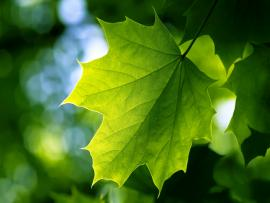 Shadow Green Leaf Hd Art Backgrounds