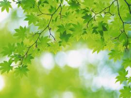 Simple Green Leaves and Green Photo Backgrounds