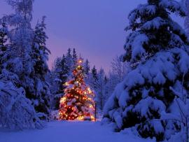 Snowy Christmas Tree   Desktops Slides Backgrounds