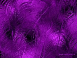 Soft Design Purple Backgrounds