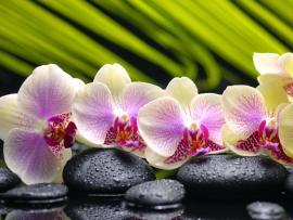 Spa Flowers Desktop Backgrounds
