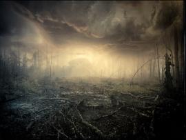 Spooky Mist Nature Landscape Clouds Dead Trees Sunrise Fire  Clip Art Backgrounds