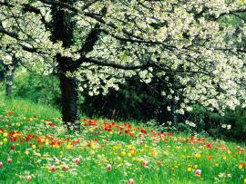 Spring Graphic Backgrounds