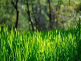 Spring Grass HD Desktop  HD Desktop Slides Backgrounds