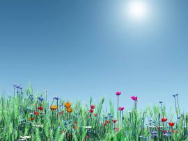 Spring Photos Of Spring Spring Spring Landscapes Spring Art Backgrounds