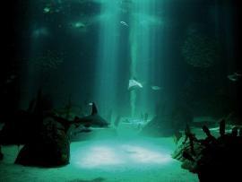 Sunken Lives Underwater Desktop Wallpaper Backgrounds