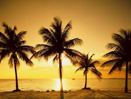 Sunset Palm Trees Template Backgrounds