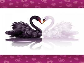 Swans Loves Backgrounds