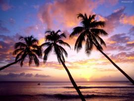 Three Palm Tree Graphic Backgrounds