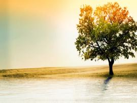 Tree and Sea Backgrounds