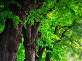 Tree Image  Photo Backgrounds