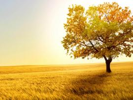 Tree In Field Backgrounds
