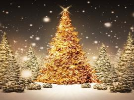 Tree Nature Christmas Tree Nature Christmas Tree   Backgrounds