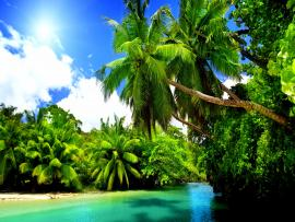 Tropical Nature 4K  Free 4K Quality Backgrounds