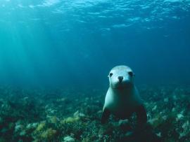 Under Sea Lion Quality Backgrounds