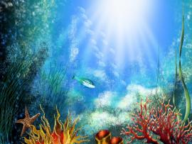 Underwater World Hd Picture Backgrounds