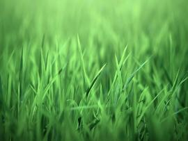 Wallpaper Grass Winter Furniture Greens Patio Quality Backgrounds