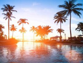Wallpaper Sea and Palm Tree Presentation Backgrounds