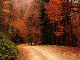 Wallpapers Autumn  Fall Nature Natures Popular Frame Backgrounds