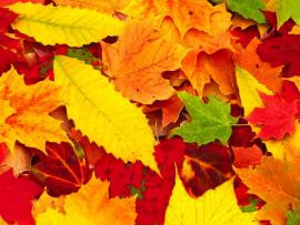 Wallpapers Sad Poetrys Red Autumn Leavess Hd Quality Backgrounds