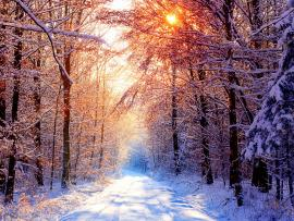 Wallpapers Winter Desktops Backgrounds