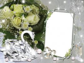 Wedding Frame Photo Backgrounds