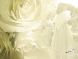 Wedding Picture Backgrounds