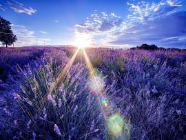 White and Lavender Hd image Backgrounds
