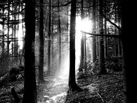 White Black Nature Desktop Widescreens Trees   Quality Backgrounds