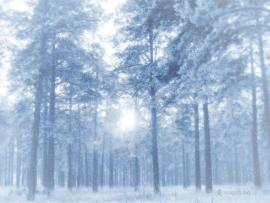 Winter HD For DesktopComputer  Free   Art Backgrounds