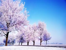 Winter HD Wide For Widescreen Quality Backgrounds