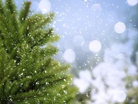 Winter image Backgrounds