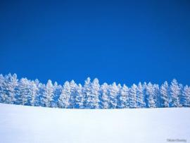 Winter Trees  Winter (509498)  Fanpop image Backgrounds