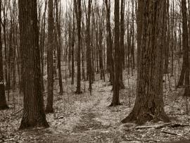 Winter Woods Slides Backgrounds
