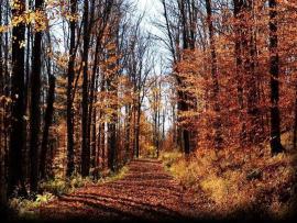 Woods Foliage image Backgrounds