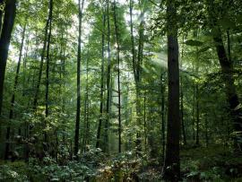 Woods Wallpaper Backgrounds