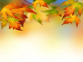 Yellow Autumn Leaves Walpaper Graphic Backgrounds