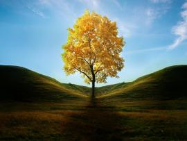 Yellow Tree Presentation Backgrounds