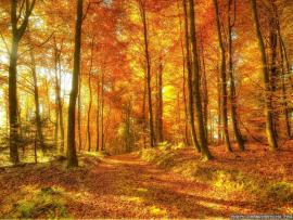 Yellow Woods Presentation Backgrounds