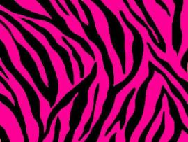 Zebra Pink and Black Zebra Print 1 Desktop Art Backgrounds
