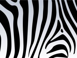 Zebra Print Vector  Free Vector Art Stock   Clip Art Backgrounds